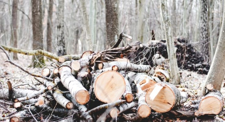 Tips for Tree Removal Central Coast